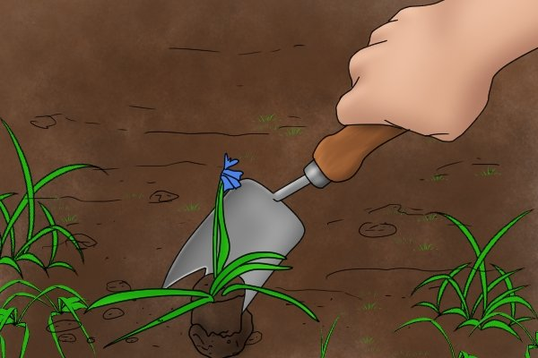 Removing weeds with a trowel