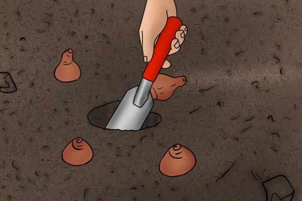 Planting bulbs with a garden trowel using a depth gauge