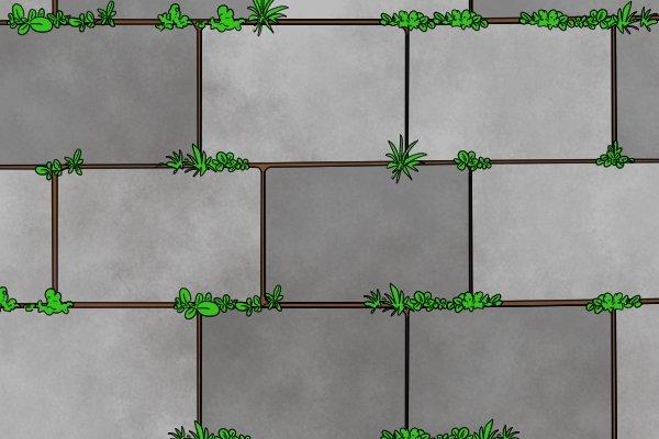 Weeds in between paving stones