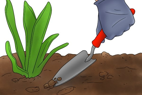 Placing tip of a garden trowel blade into the soil