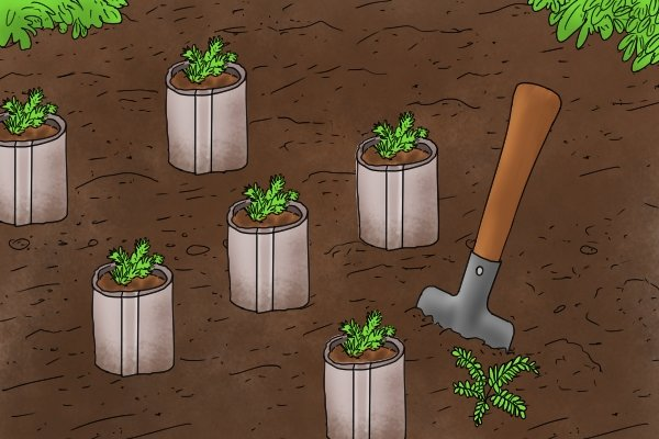 Planting seedling in a newspaper pot