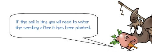 """Wonkee Donkee says """"If the soil is dry, you will need to water the seedling after it has been planted"""""""