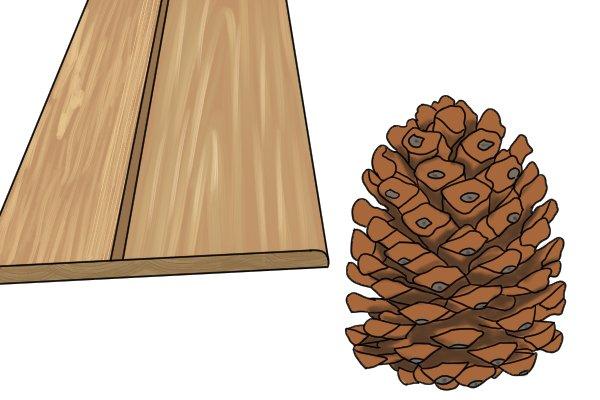 Pine, wood, woodworking, softwood, grain, conifers, hardwood, cabinet scrapers, carpenter, DIYers.