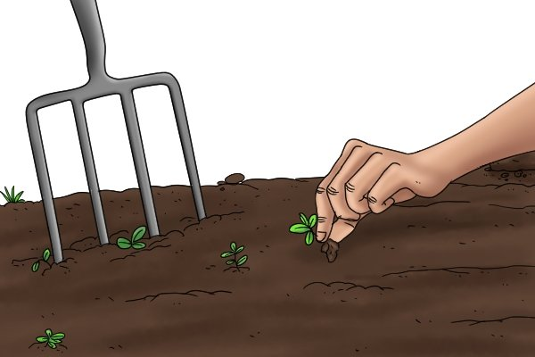 Removing weeds with a digging fork