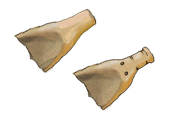 The scapula of an Ox