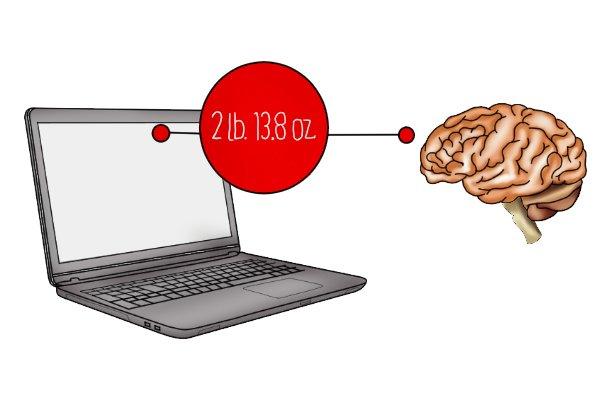 human brain, laptop,