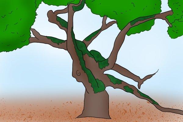 Hardwood tree, crooked, random shapes, timber