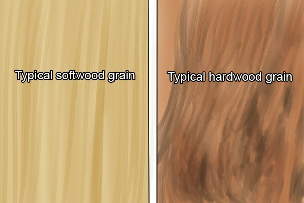 Hardwood and softwood grain compared, timber, wood