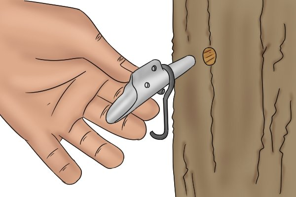 Inserting a spile into a pre-bored hole in a tree