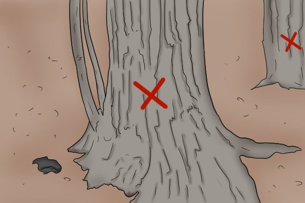 Diagram showing a viable drilling location in a maple tree that will allow a spile to be hammered into the trunk so that maple syrup can be collected