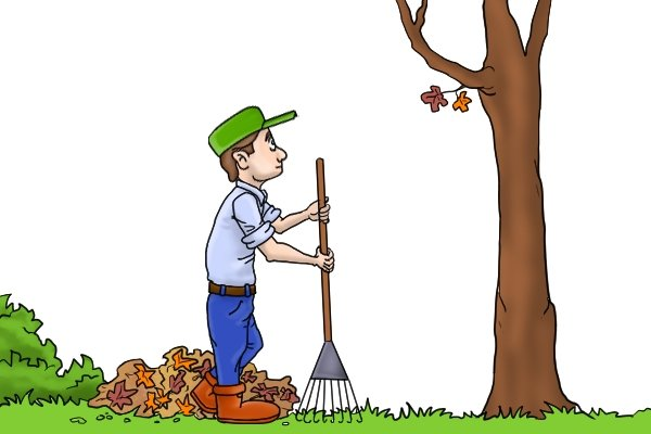 Rake leaves with a leaf or lawn rake when its autumn
