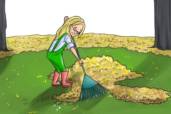 Sweep leaves with a rake to gather them into a pile
