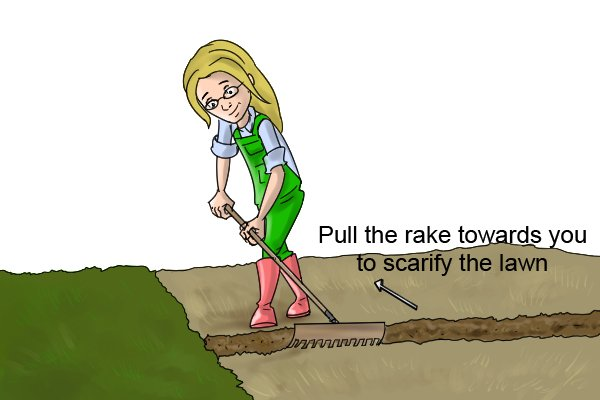Pull the rake towards you to scarify the lawn and remove thatch and moss
