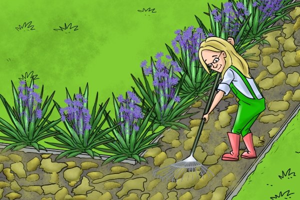 Moss can build up on lawns, pathways and in planting beds. You can remove moss with a rake