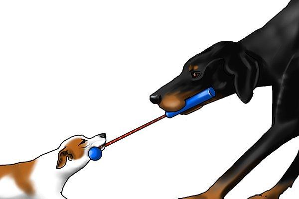 dogs tug of war