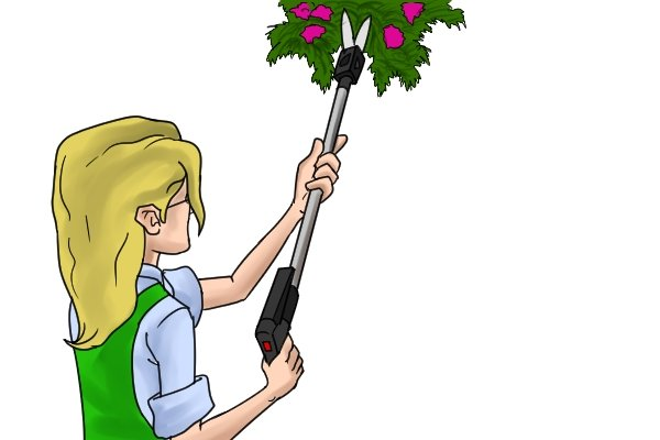 Trimming flowers in hanging basket with swivel shears