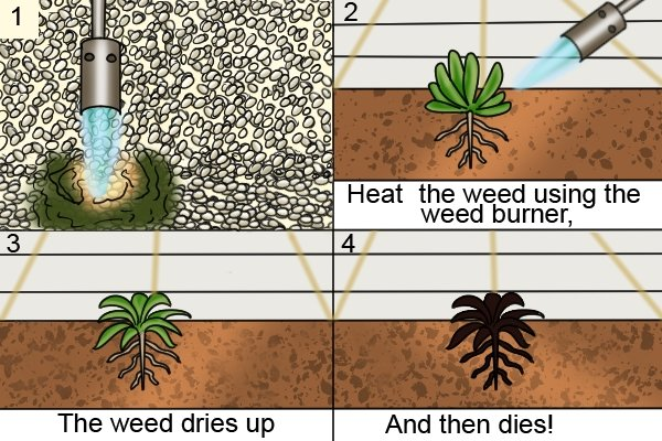 Killing weeds with a garden blow lamp: the four stages of the process