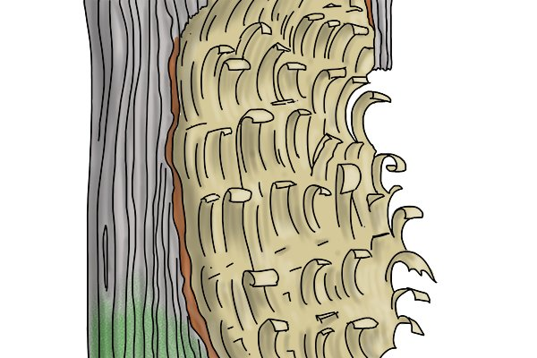 Image of a tree that has had a lot of wood shaved out of its trunk by an adze