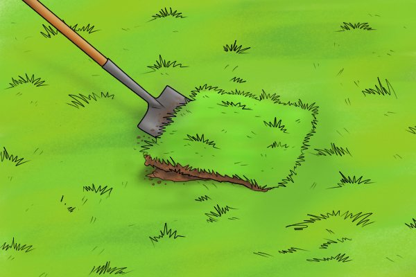 Lifting Turf with a Spade