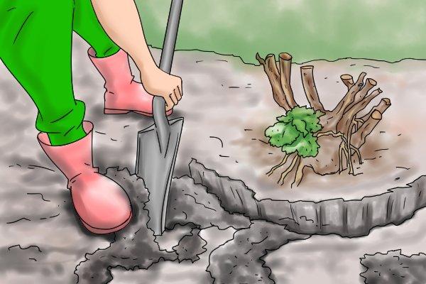 Man digging around base of shrub with spade