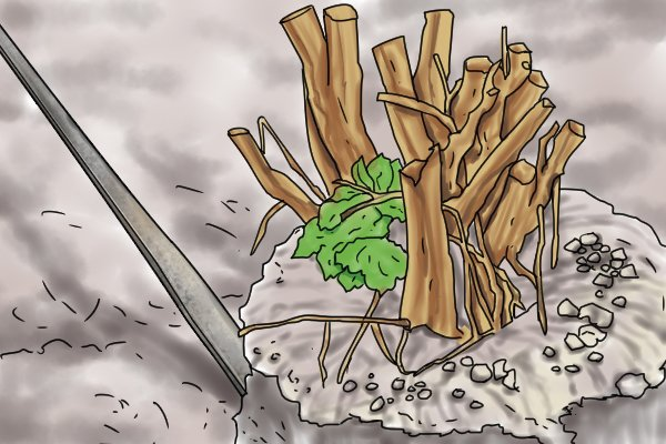 Use the chisel edge of your digging bar to break through the root system