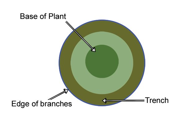 A Diagram Depicting the Trench, Parallel to the Base of the Tree and the Branches