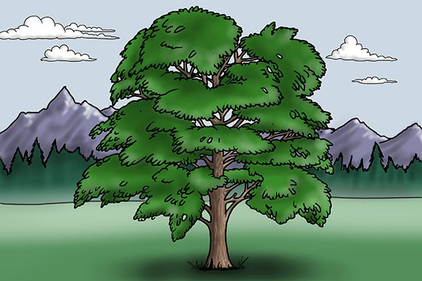 Image of a deciduous tree to illustrate where the hard woods that are used to create dowels come from
