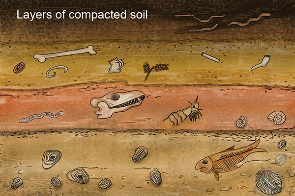 layers of compacted soil