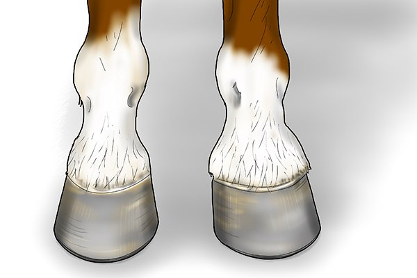 A horse keeper lifting up their horse's hoof to put onto a hoof jack