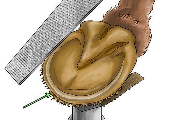 Image to show the fibres that can come off the hoof when filing
