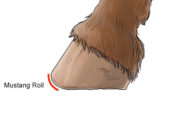 Image of a hoof that has had a mustang roll applied