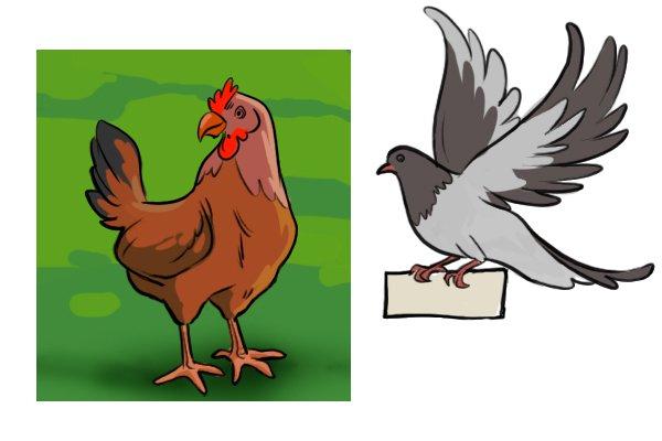 pigeon, chicken, carrier pigeon