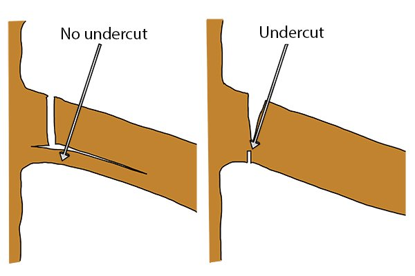 Without an undercut, the branch may begin breaking off before you have cut fully through it.