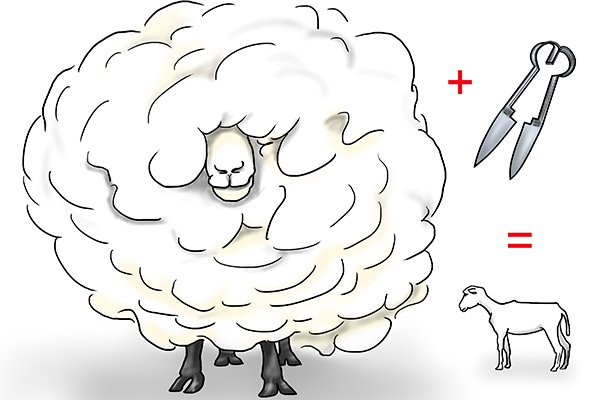 sheep are sometimes sheared with hand shears